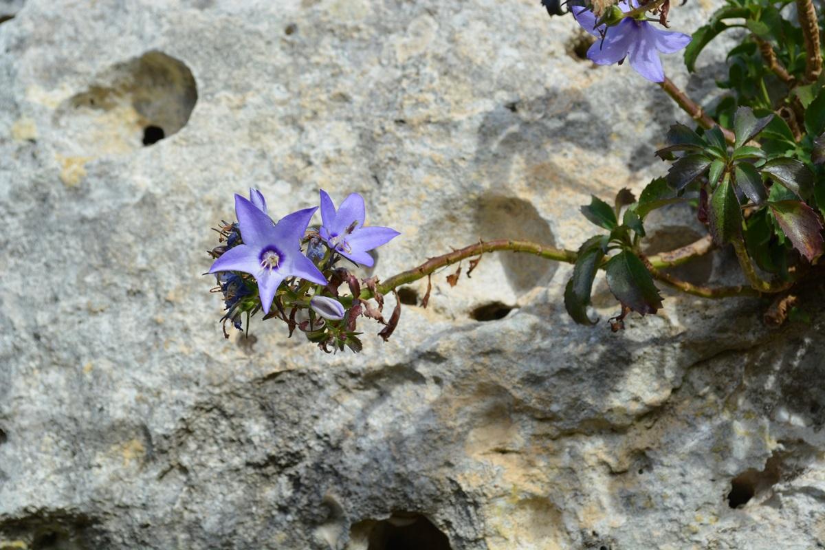Fiori Selvatici Foto E Nomi flora di matera piante arbusti fiori orchidee murgia materana
